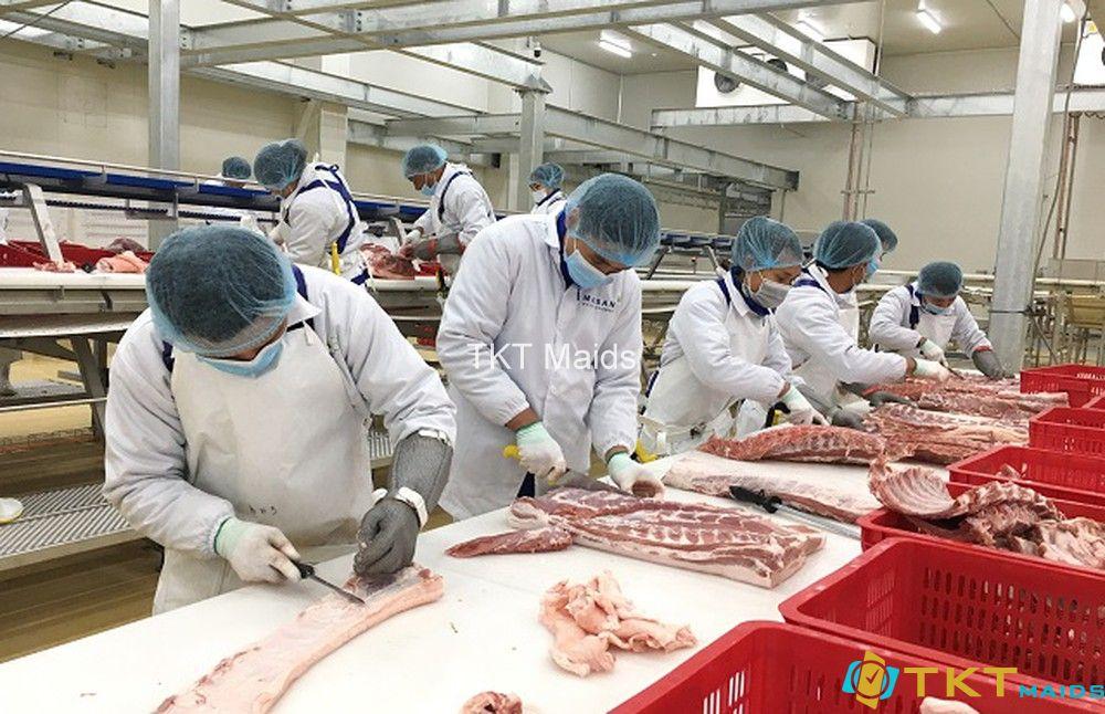đóng gói và vận chuyển tại nhà máy chế biến thịt lợn mát