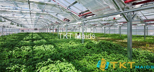 Mô hình sản xuất rau an toàn xuất khẩu