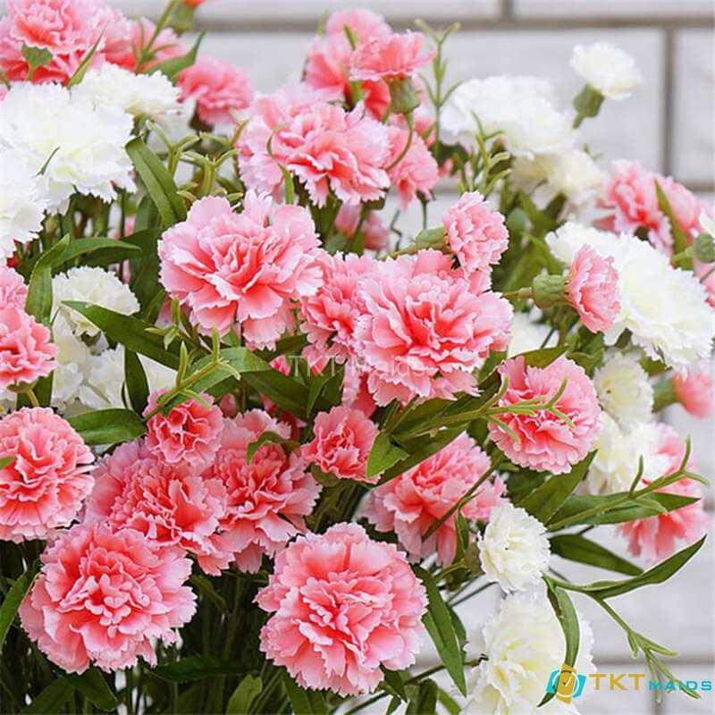 Hình ảnh: Hoa cẩm chướng