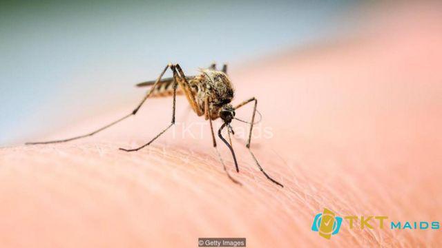 Hình ảnh: Con muỗi